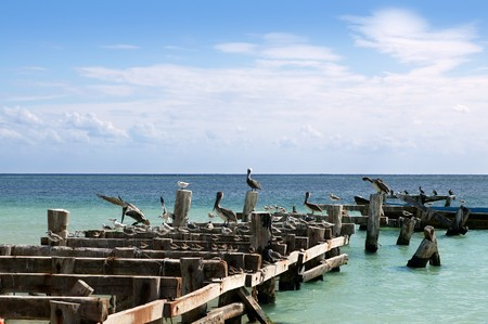pelikan: Caribbean old aged wooden dock with seagull and pelikan sea birds