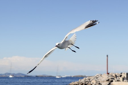 flying seagulls on Formentera port summer balearic islands Stock Photo - 7712720