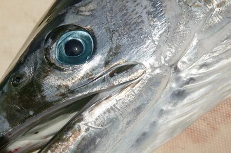 mediterranean spearfish billfish head tetrapturus belone marlin photo
