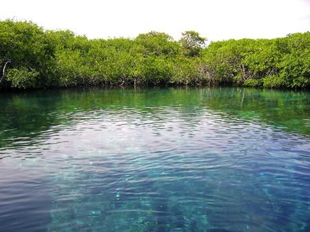 roo: mangrove river in central america mexico quintana roo Stock Photo