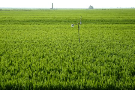 Rice field green meadow in Spain horizon perspective photo