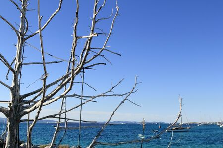 Mediterranean blue sea dried tree branches foreground Stock Photo - 7920670