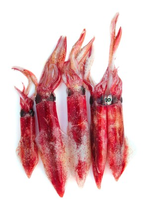 vulgaris: fresh squid Loligo vulgaris seafood catch on white background Stock Photo
