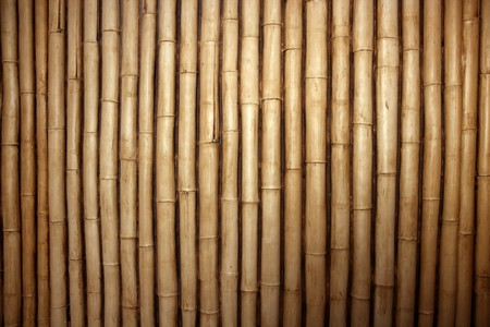 reeds: Bamboo cane row arrangement background pattern