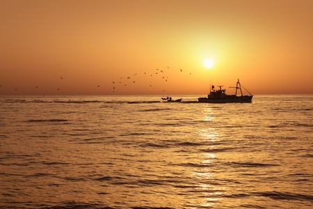 Fisherboat professional sardine catch fishery sunrise backlight with seagulls flying photo