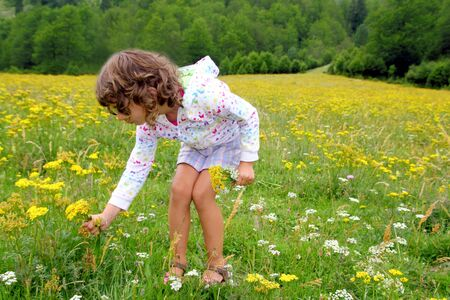 pyrenees: Girl picking flowers in yellow spring meadow beautiful scenic in Pyrenees spain Stock Photo