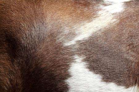 textura pelo: caballo pelo piel textura marr�n y blanco fondo Foto de archivo