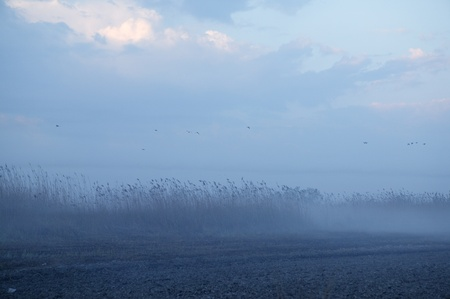Foggy moor landscape dark blue gray with canes  birds Stock Photo - 8795576