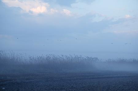 Foggy moor landscape dark blue gray with canes  birds photo