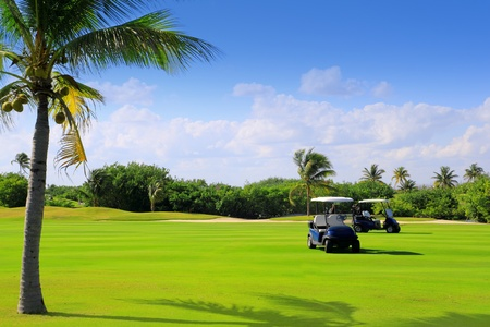 golf cart: golf course tropical palm trees in mayan riviera Mexico