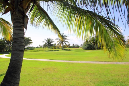 golf course tropical palm trees in cancun Mexico photo
