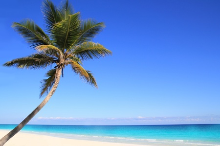 mayan riviera: Caribbean coconut palm trees in tuquoise sea water