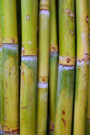 harmless: bamboo cane food sugar green trunks in row Stock Photo