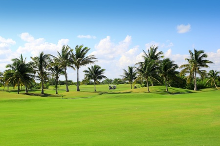 of course: golf course tropical palm trees in Mexico