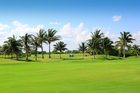 parcours de golf de palmiers tropicaux au Mexique