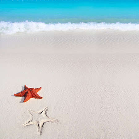 shallow: beautiful caribbean starfish tropical sand turquoise beach Stock Photo
