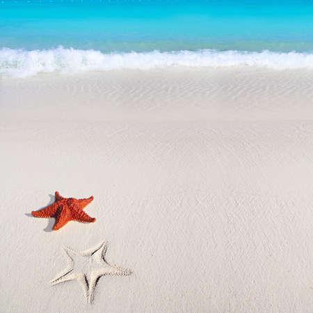 shallow water: beautiful caribbean starfish tropical sand turquoise beach Stock Photo