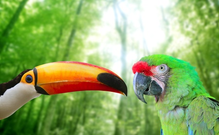 Toco toucan and Military Macaw Green parrot in jungle in love birds