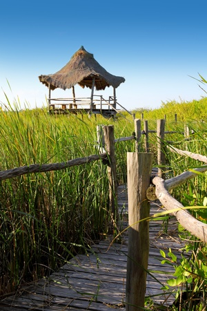 palapa: hut palapa in mangrove reed wetlands in mexico