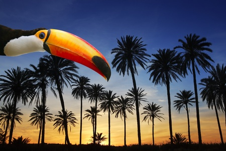 birds of paradise: toco toucan bird from Brazil in tropical palm tree sunset sky