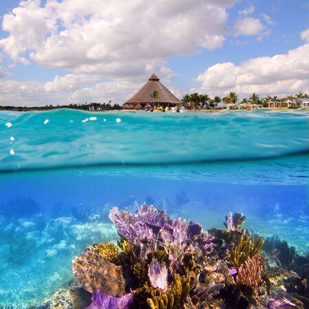 cabaña: Arrecife de coral en la Riviera Maya Cancun México bajo el agua