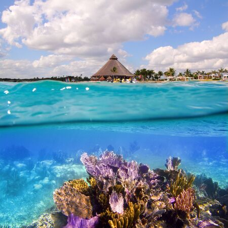 Coral reef in Mayan Riviera Cancun Mexico underwater photo
