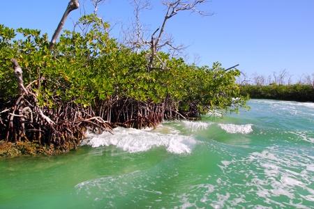 aguada: Mangrove waves of boat traffic in Cancun Mexico