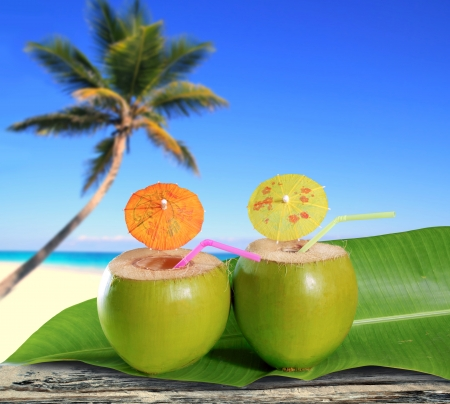 fresh coconuts straw cocktails on tropical palm tree caribbean beach photo