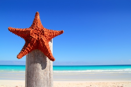 beautiful caribbean starfish on wood pole beach photo