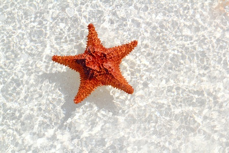 fine fish: beautiful starfish orange in wavy shallow water Stock Photo