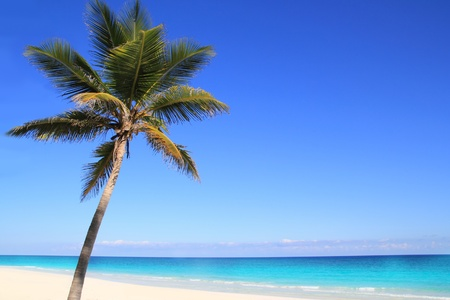 Caribbean coconut palm trees in tuquoise sea water photo