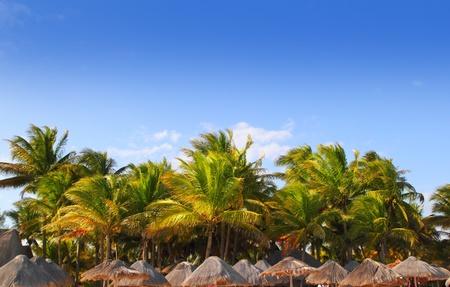 palapa: Mayan riviera tropical sunroof palapa hut coconut palm trees blue sky Stock Photo