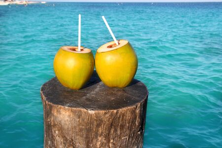 fresh two coconuts juice cocktail water straws in caribbean sea trunk photo