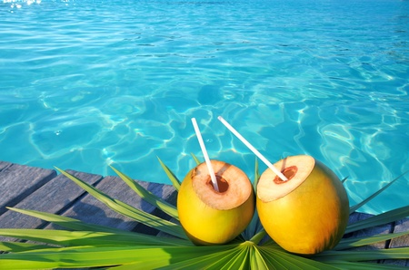 coconuts cocktail palm tree leaf in Caribbean tropical sea photo