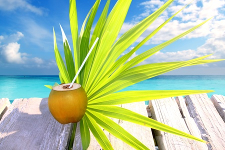 coconut fresh in caribbean sea pier chit palm leaf tropical topic photo
