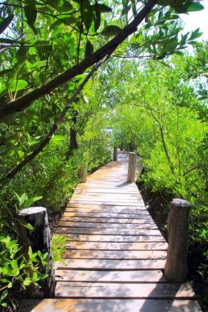 mangrove forest walkway jungle Quintana Roo mexico photo