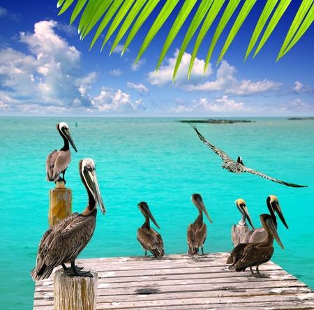 Türkise karibische Pelican Strandblick tropischen Meer Mexiko Standard-Bild
