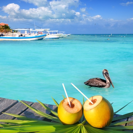 Caribbean fresh coconuts cocktail pelican in turquoise sea