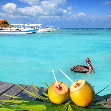 Pelícano cóctel Caribe coco fresco en mar turquesa