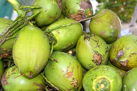 coconuts fruits stacked for making juice water refreshment photo