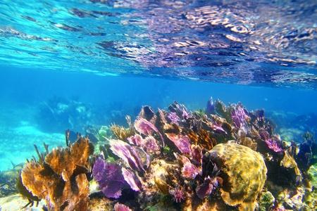 roo: Caribbena coral reef Mayan riviera colorful species underwater treasure
