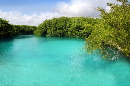 eau turquoise: cenote mangrove clear turquoise water Mayan Riviera Mexico
