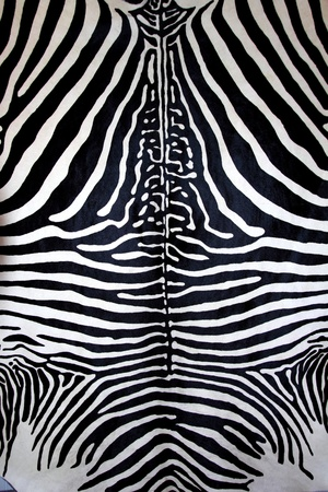 furry animals: animal zebra skin black and white fur stripes leather background