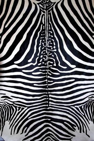 furry animal: Fondo de cuero de rayas de pelaje blanco y negro de piel de animal cebra Foto de archivo