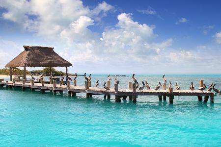 riviera maya: Contoy island Mexico wood pier palapa nature reserve