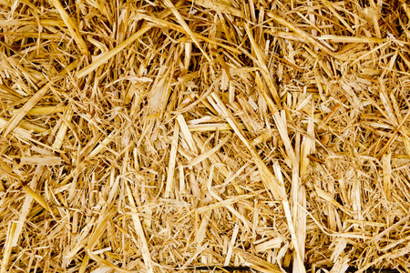 bale golden straw texture ruminants animal food background Stock Photo - 9705865