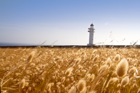 Barbaria cape lighthouse formentera from golden meadow photo