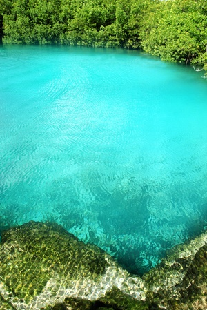 deep roots: cenote mangrove clear turquoise water Mayan Riviera Mexico