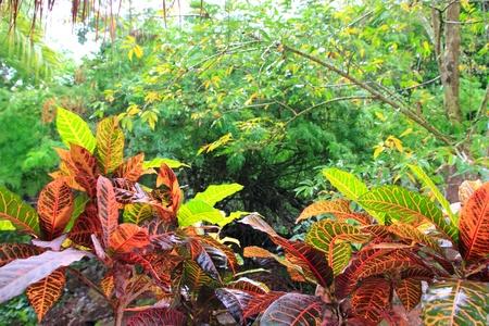 Jungle rainforest Yucatan Mexico Central America plants photo