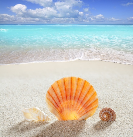 beach shell in white sand like a summer vacation background on turquoise Caribbean sea photo